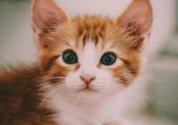 好听顺口的猫名字