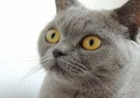 男猫咪高贵洋气的名字英文