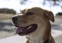 沙雕又霸气的狗名字