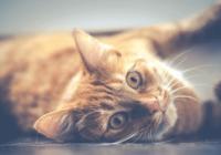 宠物姓名公猫英文名