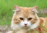 霸气又蠢萌的宠物猫名字