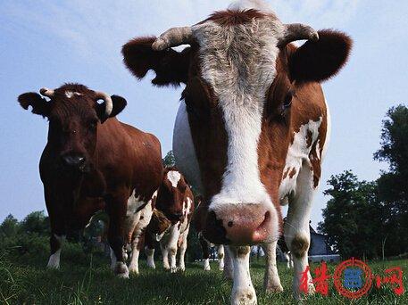 养殖公司钱柜qg777-好听的养殖公司钱柜qg777