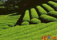 好听的茶叶公司名字-茶叶公司取名-公司名称大全