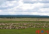 牧业公司名字-牧业公司起名-公司名字大全