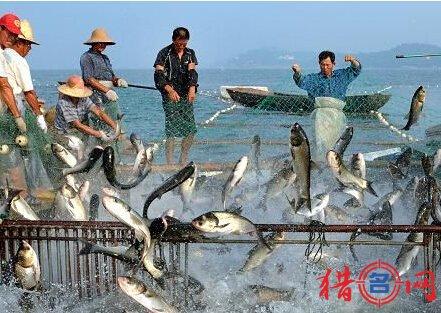 渔业公司钱柜qg777-水产渔业公司钱柜qg777-公司钱柜qg777大全