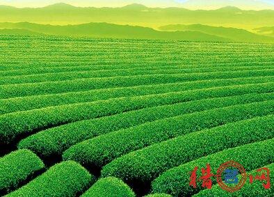 茶叶品牌取名大全