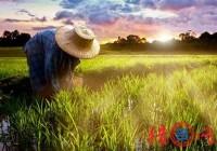 农业科技公司起名大全