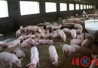 养猪厂起名大全
