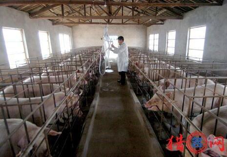 养猪厂钱柜qg777大全