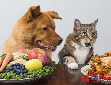 宠物粮食品牌钱柜qg777大全