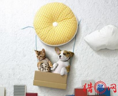 宠物粮食品牌钱柜qg777