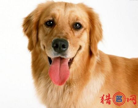 宠物公司钱柜qg777大全