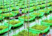 生态养殖场起名大全