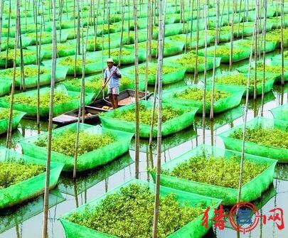 生态养殖场钱柜qg777大全