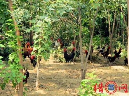 生态养殖场钱柜qg777