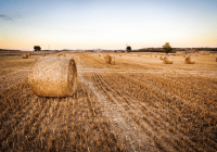 高端大气的农副产品公司起名