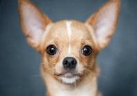 狗狗好听的独特名字