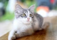 给猫起个名字特别萌的