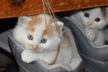 可爱的猫咪名字大全