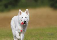 有吉祥寓意的狗狗名字