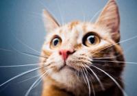 猫咪的名字独特可爱