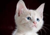 公猫咪高贵洋气的名字