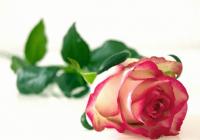 浪漫的花店钱柜qg777大全