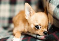 给狗狗取个逗比的名字