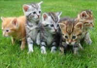 宠物猫名字大全可爱