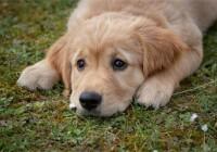 给狗狗取个沙雕名字