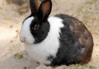可爱的宠物兔名字