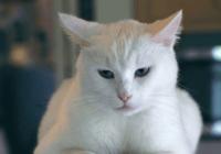 给小猫起名字大全可爱
