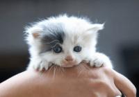 猫名字大全洋气的