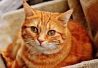 有创意的橘猫名字