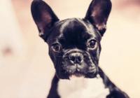 黑白狗狗名字大全可爱