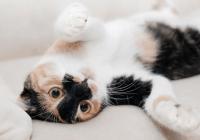 猫咖名字大全可爱