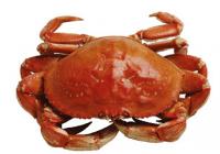 带蟹的餐厅名字