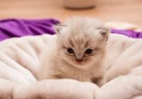 正经又沙雕的猫咪名字
